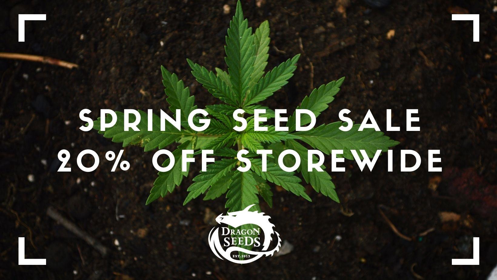 Dragon Seeds Spring Sale '21